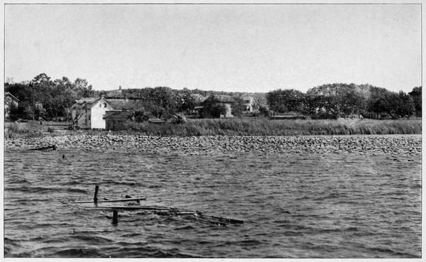 Nelumbo_lutea,_Sodus_Bay,_Lake_Ontario 600x369